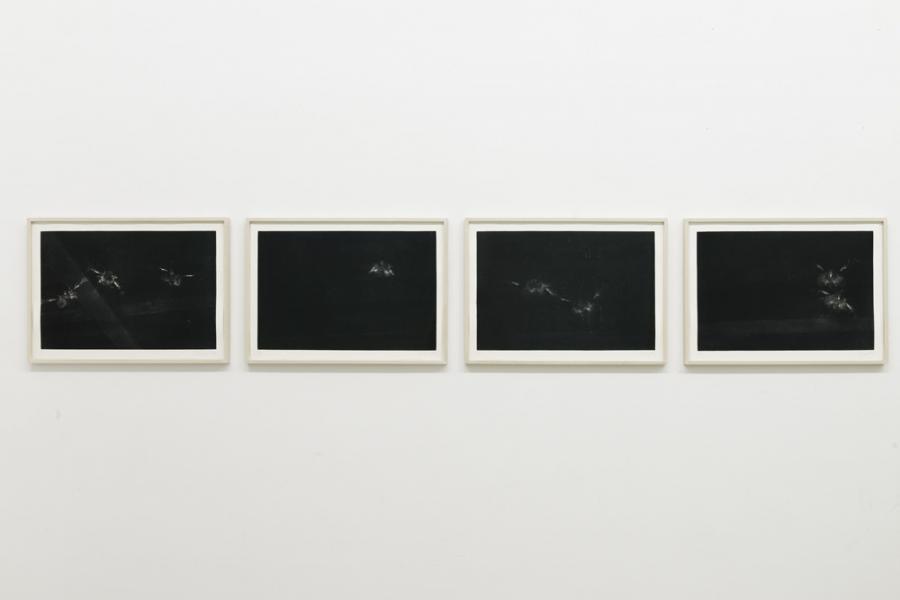 """SASHA PIRKER, """"100 untitled birds"""", Synchrotron Radierung auf Zerkall Bütten 350g/m, je 45 x 64 cm, 2016, Ed. 5 1, Druck: Tomas Eller"""